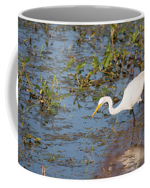 Great Egret Coffee Mug featuring the photograph Getting Ready by Linda Kerkau