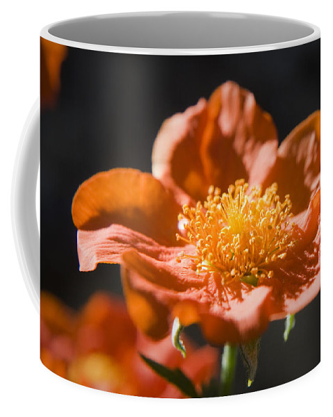 Geum Coffee Mug featuring the photograph Geum Scarlet Avens by Teresa Mucha