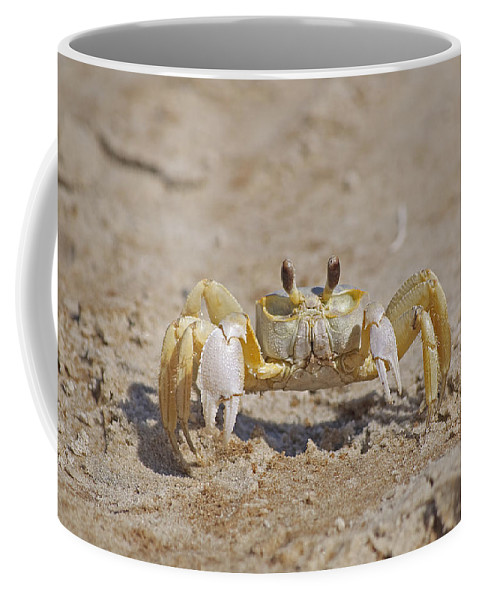 Crab Coffee Mug featuring the photograph Ghost Crab by Kenneth Albin