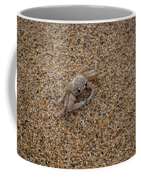 Animals Coffee Mug featuring the photograph Ghost Crab by Robert Potts