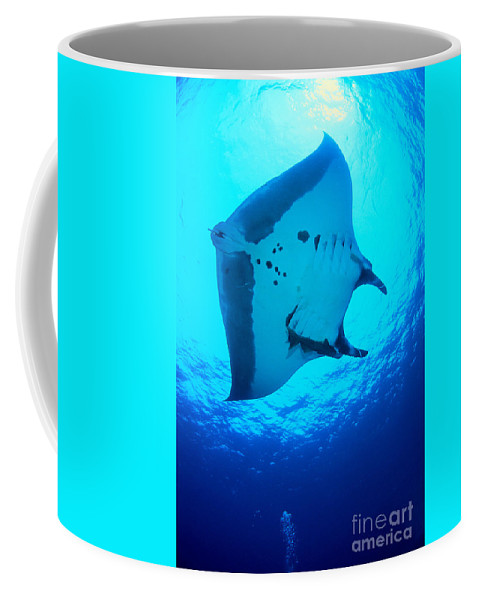 Animal Art Coffee Mug featuring the photograph Giant Manta Ray by Dave Fleetham - Printscapes