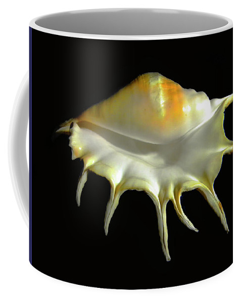 Frank Wilson Coffee Mug featuring the photograph Giant Spider Conch Seashell Lambis Truncata by Frank Wilson