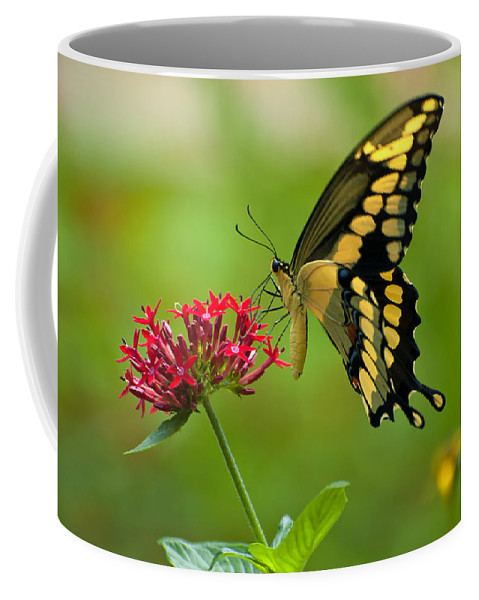 Giant Swallowtail Coffee Mug featuring the photograph Giant Swallowtail Butterfly by Rich Leighton