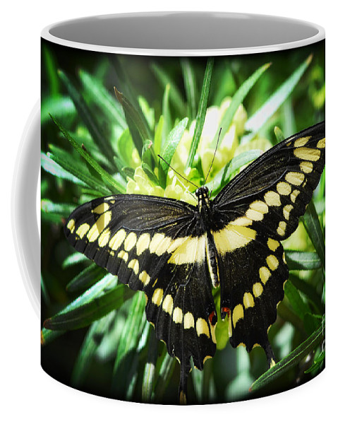 Giant Swallowtail Butterfly Coffee Mug featuring the photograph Giant Swallowtail by Saija Lehtonen