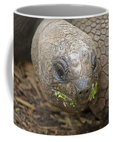 Tortoise Coffee Mug featuring the photograph Giant Tortoise by Kenneth Albin