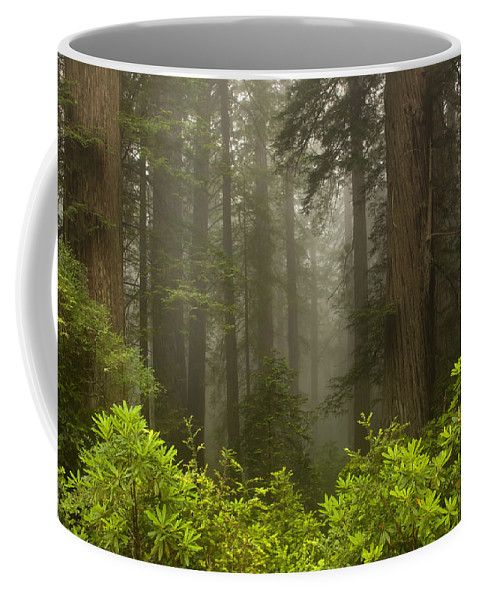 Redwood Coffee Mug featuring the photograph Giants In The Mist by Mike Dawson