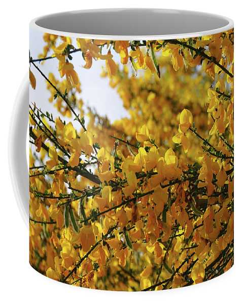 Ginestra Coffee Mug featuring the photograph Ginestre by Ilaria Andreucci