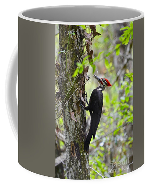 Woodpecker Coffee Mug featuring the photograph Ginger In The Bayou by Andrea Spritzer