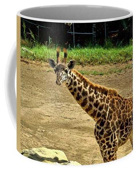 Santa Coffee Mug featuring the photograph Giraffe 1 by Michael Gordon