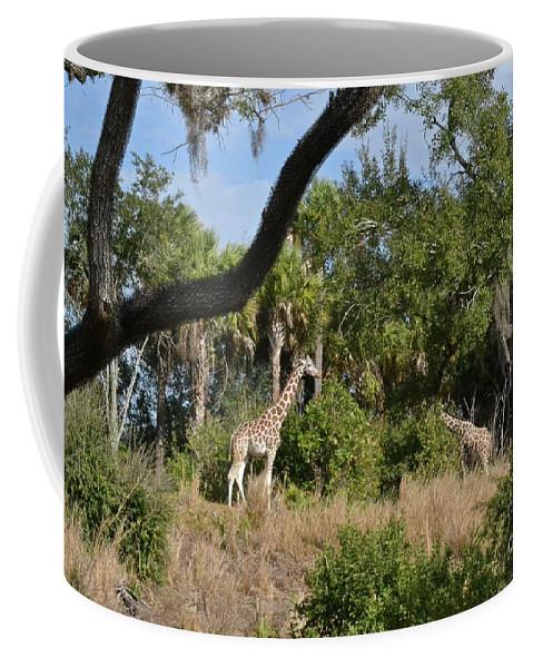Giraffes Coffee Mug featuring the photograph Giraffes by Carol Bradley