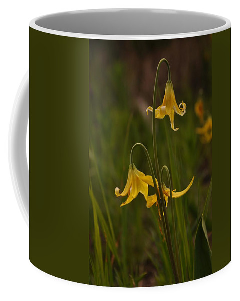 Yellowstone National Park Coffee Mug featuring the photograph Glacier Lilly by Frank Madia