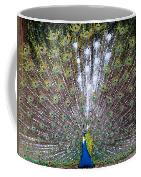 White Coffee Mug featuring the photograph Glassy Peacock by Laurel Powell
