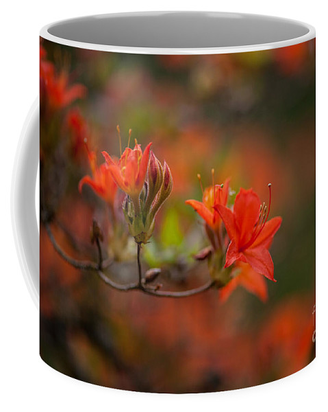 Rhodies Coffee Mug featuring the photograph Glorious Blooms by Mike Reid