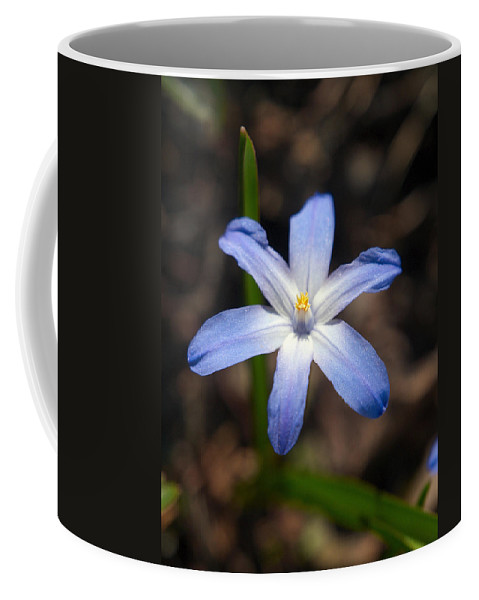 Lehtokukka Coffee Mug featuring the photograph Glory Of The Snow 1 by Jouko Lehto
