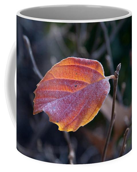 Leaf Coffee Mug featuring the photograph Glowing Leaf by Douglas Barnett