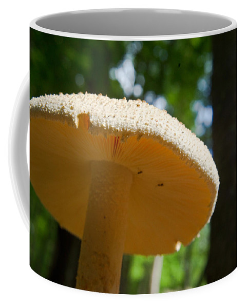 Cumberland Coffee Mug featuring the photograph Glowing Mushroom Cap by Douglas Barnett