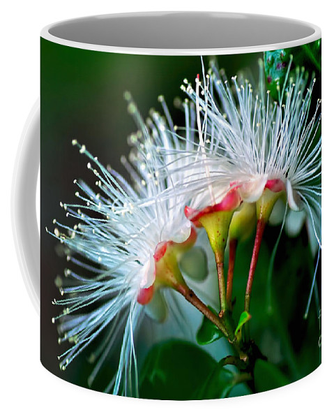 Photography Coffee Mug featuring the photograph Glowing Needles by Kaye Menner