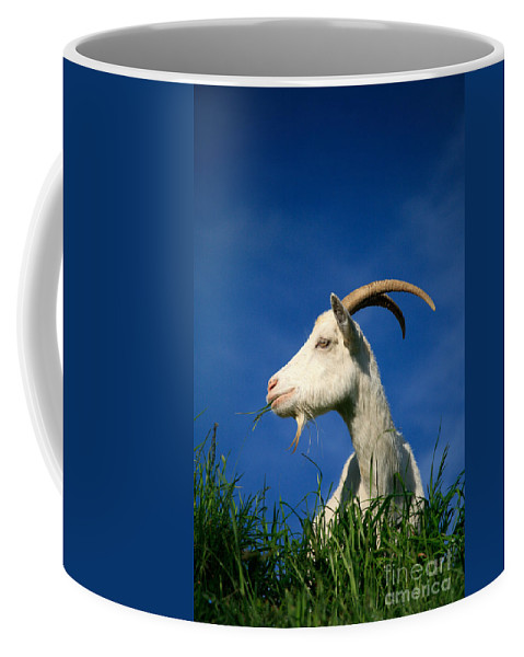 Animals Coffee Mug featuring the photograph Goat by Gaspar Avila
