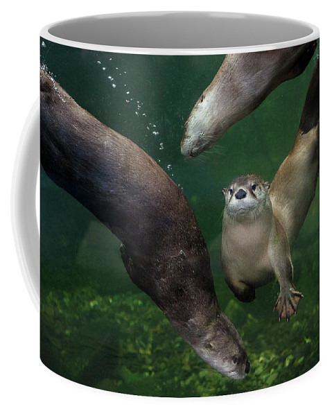 Otters Coffee Mug featuring the photograph Going Their Own Way by Greg Nyquist