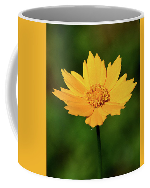 Ann Keisling Coffee Mug featuring the photograph Gold In The Garden by Ann Keisling