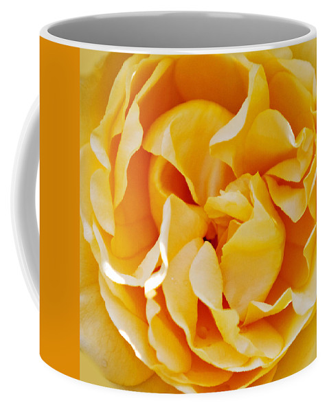 Roses Coffee Mug featuring the photograph Gold Rose 1 by Art Block Collections
