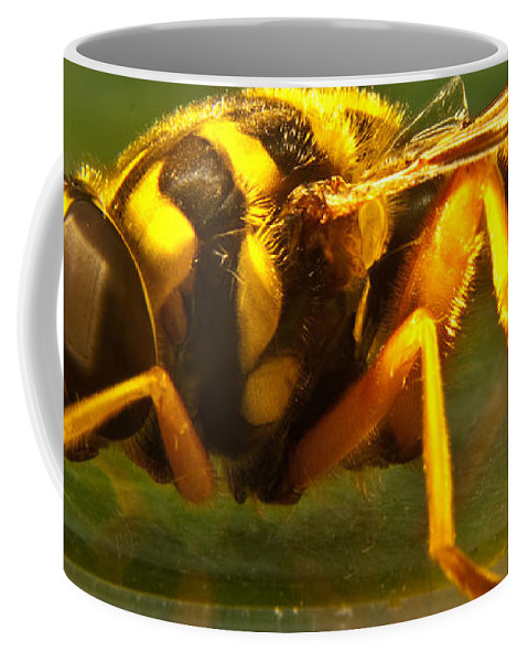 Syrphid Coffee Mug featuring the photograph Gold Syrphid Fly by Douglas Barnett