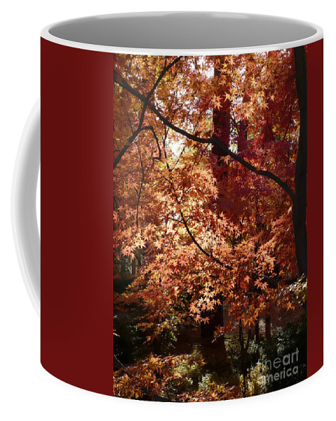 Autumn Coffee Mug featuring the photograph Golden Autumn Sunshine by Carol Groenen