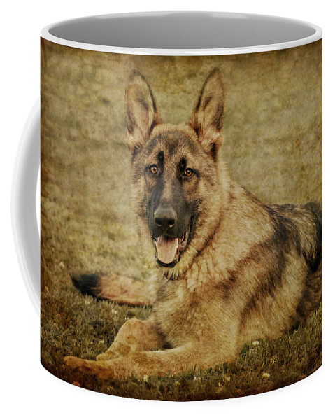 Dog Coffee Mug featuring the photograph Golden Boy by Sandy Keeton