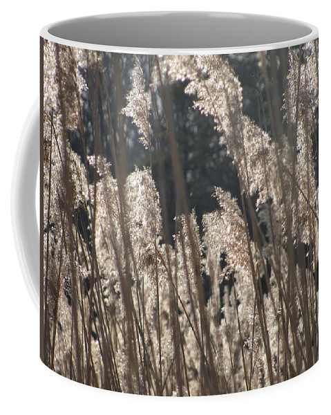Golden Brown Grass Photographs Canvas Prints Reeds Nuetral Colors Landscape Winter Wetland Images Winter Marsh Photo Prints Maryland Cheasapeake Tributary Coffee Mug featuring the photograph Golden Brown by Joshua Bales