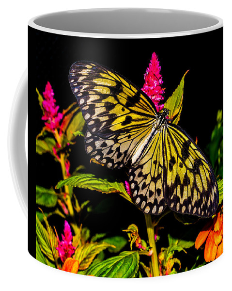 Butterfly Coffee Mug featuring the photograph Golden Butterfly by Nick Zelinsky