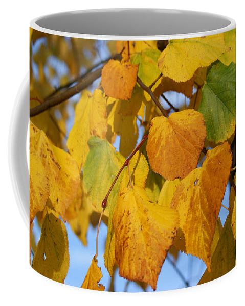 Autumn Coffee Mug featuring the photograph Golden by Carol Lynch