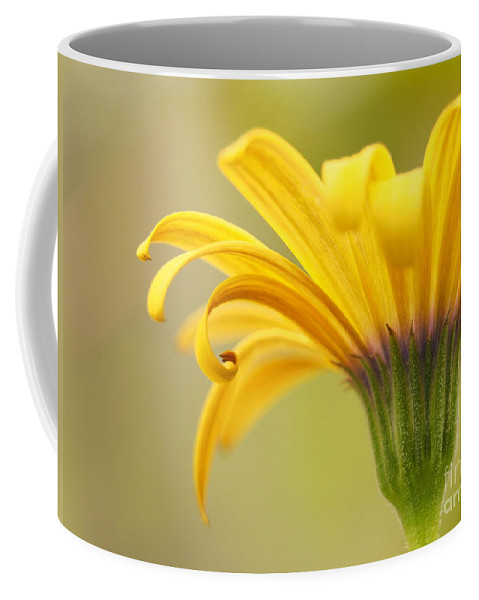 Flowers Coffee Mug featuring the photograph Golden Curls by Dorothy Lee