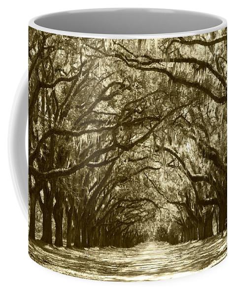 Live Oaks Coffee Mug featuring the photograph Golden Dream World by Carol Groenen