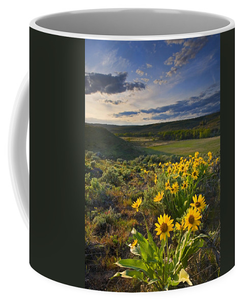 Balsamroot Coffee Mug featuring the photograph Golden Hills by Mike Dawson