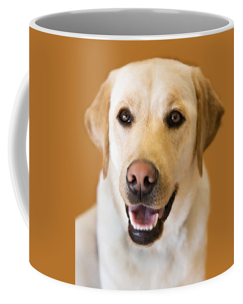 Lab Coffee Mug featuring the photograph Golden Lab by Marilyn Hunt