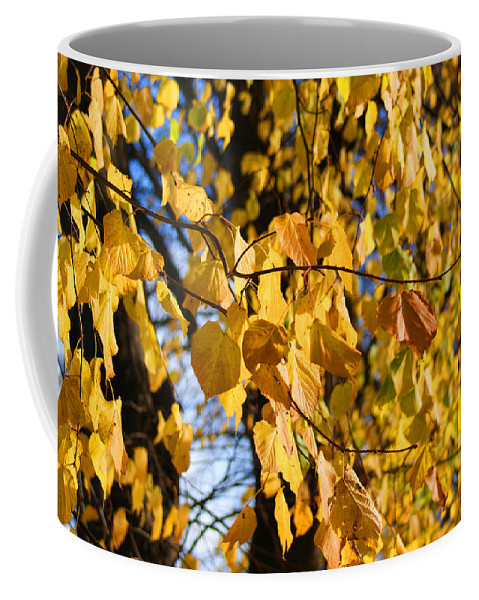Autumn Coffee Mug featuring the photograph Golden Leaves by Carol Lynch