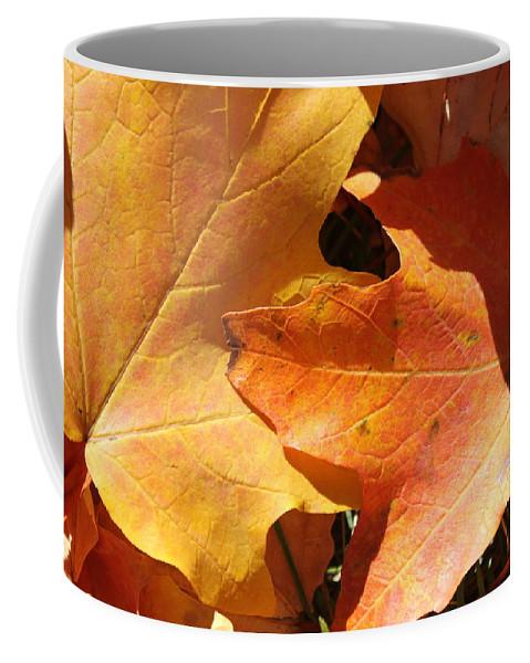 Leaves Coffee Mug featuring the photograph Golden Orange by Lauri Novak