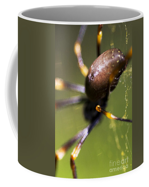 Arachnid Coffee Mug featuring the photograph Golden Orb Spider by Jorgo Photography - Wall Art Gallery