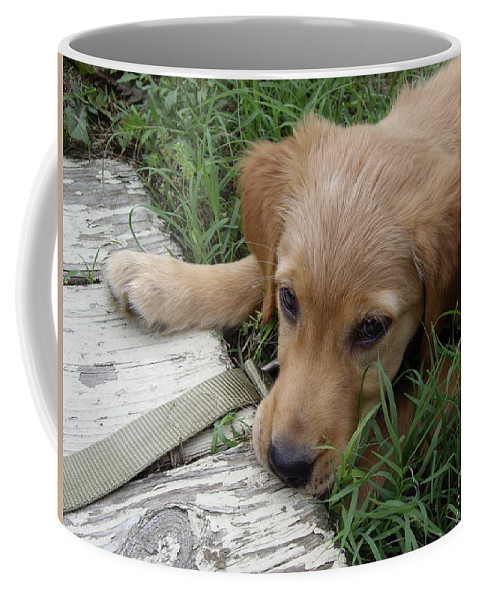 Puppy Coffee Mug featuring the photograph Golden Retriever by Jean Haynes