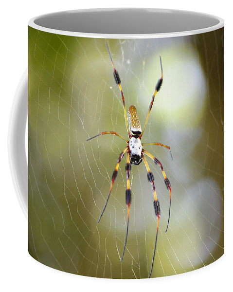 Spider Coffee Mug featuring the photograph Golden Silk Spider by Kenneth Albin