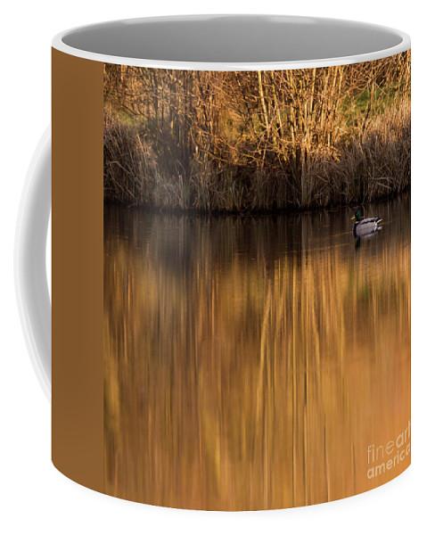 Gold Coffee Mug featuring the photograph Golden Sunset by Angel Ciesniarska