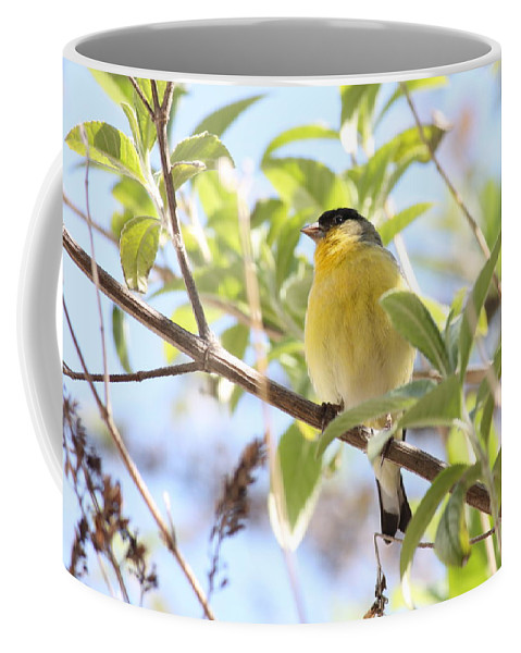 Bird Coffee Mug featuring the photograph Goldfinch In Spring Tree by Carol Groenen