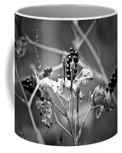Flower Coffee Mug featuring the photograph Gone To Seed Berries And Vines by Teresa Mucha