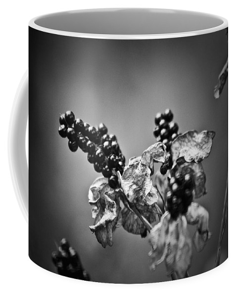 Flower Coffee Mug featuring the photograph Gone To Seed Blackberry Lily by Teresa Mucha