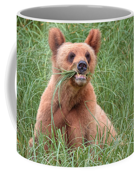 Khutzymateen Grizzly Bear Sanctuary Coffee Mug featuring the photograph Good Stuff by James Anderson
