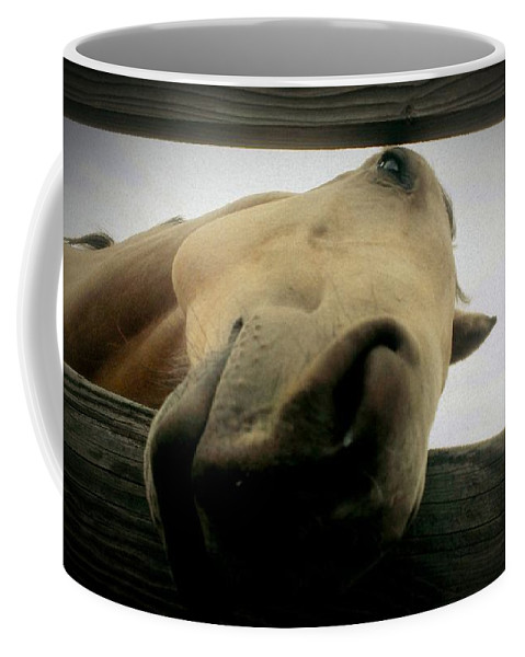 Horse Coffee Mug featuring the photograph Goofball by LKB Art and Photography