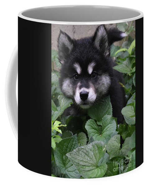 Alusky Coffee Mug featuring the photograph Gorgeous Alusky Puppy Playing Hide And Seek by DejaVu Designs