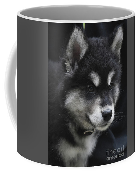 Alusky Coffee Mug featuring the photograph Gorgeous Eight Week Old Alusky Puppy Dog by DejaVu Designs