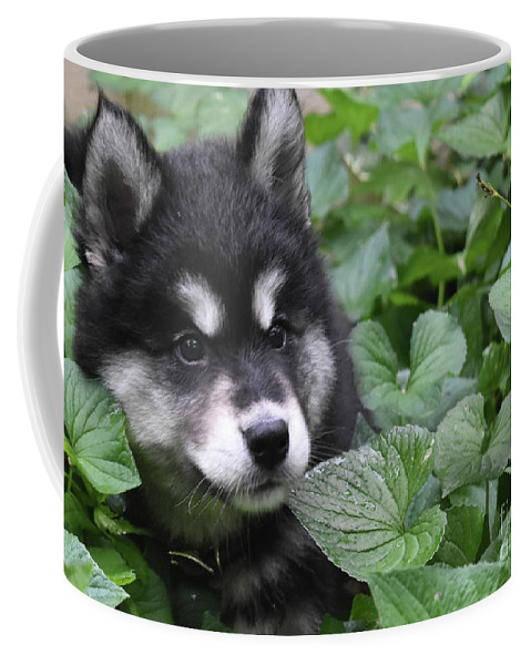 Alusky Coffee Mug featuring the photograph Gorgeous Fluffy Alusky Puppy Peaking Out Of Plants by DejaVu Designs