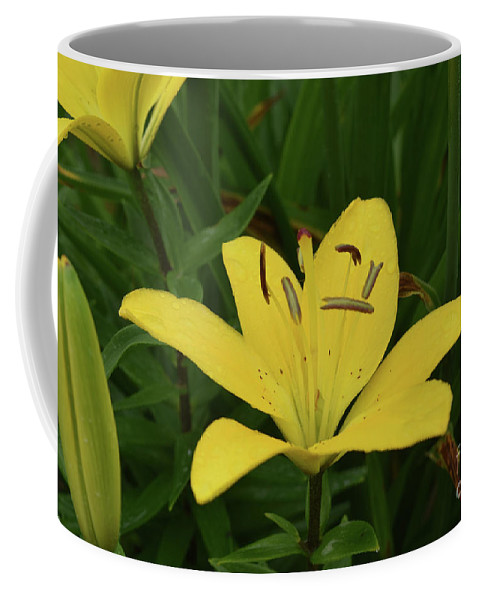 Lily Coffee Mug featuring the photograph Gorgeous Yellow Lily Growing In Nature Up Close by DejaVu Designs